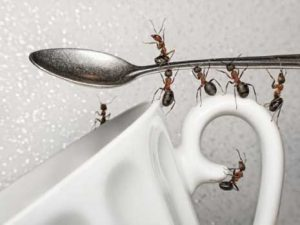 Ants Carrying the Cup Away