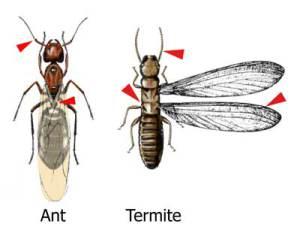Ant Control Miami – 786-462-5912